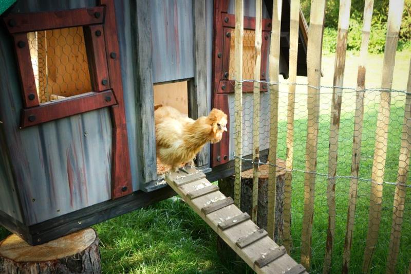 Photo poule Casa Chicken 1